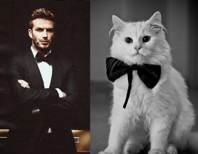Gatti in posa, come i modelli, gli attori e gli sportivi famosi