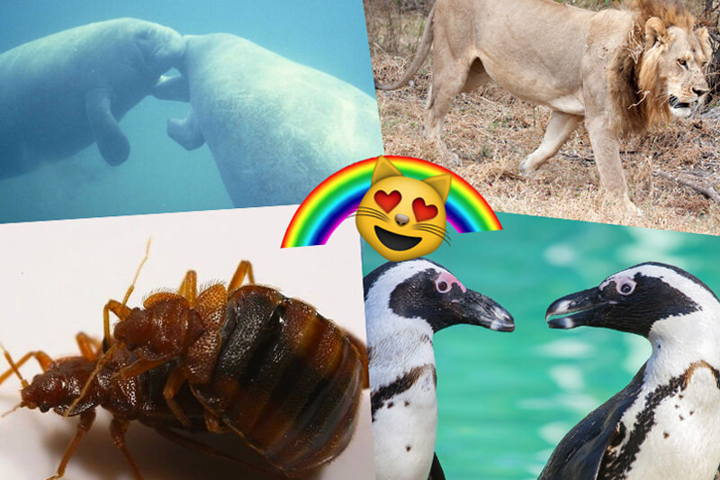 animali_gay